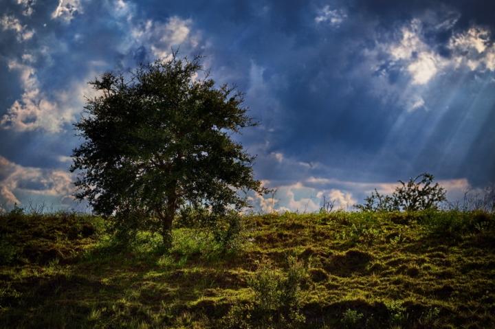 1_tree_hill2